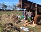 En la Finca El Retiro continúan las labores agrícolas