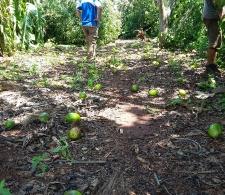 Daños en áreas agrícolas cercanas a Cárdenas