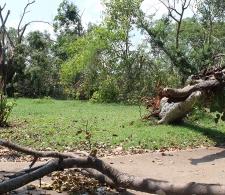 Daños provocados por huracán Irma en territorio cardenense