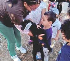 Durante la Actividad asistida con animales