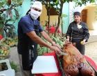 8-Cerdo-asado-ofrecido-a-los-presentes-por-los-trabajadores-de-la-Finca-El-Retiro