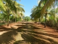 camino cocos