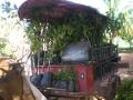 reforestacion1