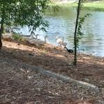 4 Práctica de piscicultura en la Finca El Retiro. Dragado del estanque