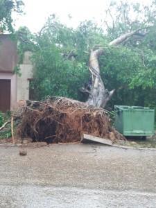 Efectos del Huracán Irma en Cárdenas