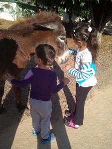 Infantes interactuando con animales